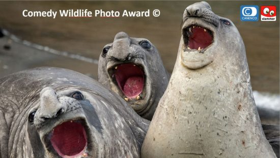 New Comedy Wildlife Photo Award Collection coming soon
